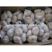 Grade one Pure white garlic