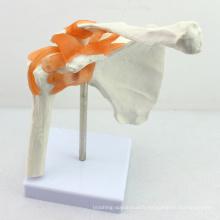 JOINT07 (12354) Anatomie médicale Utilisation à l'hôpital Modèles d'épaule anatomiques médicaux professionnels