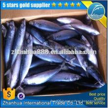 100% Warranty Advantage Price Sell Korean Frozen Pacific Mackerel
