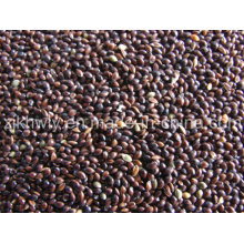 Black Broomcorn Millet