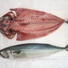 Taiwan pacific mackerel, chub mackerel seafrozen, blue mackerel