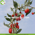 Factory Supply Nutrition Dry Red Wolfberries