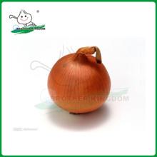 Cebolla fresca / cebolla amarilla fresca / cebolla roja fresca