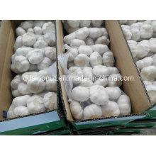 Chinesischer weißer Knoblauch 800gx10bags / Karton
