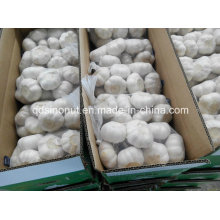 Chinese White Garlic 800gx10bags/Carton