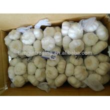 Paquet d'ail organique 2014 de 500g