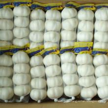 Ajo blanco puro chino de alta calidad