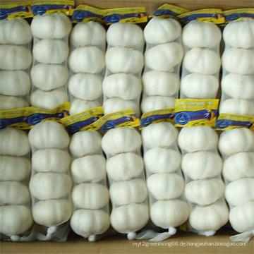 Hochwertiger chinesischer Pure White Knoblauch