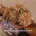 Extrato 100% natural e puro de cordyceps, extrato sinensis selvagem de cordyceps sinensis