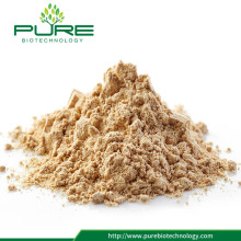 Natural Panax Ginseng Root Extract