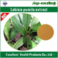 Labisia Pumila Extract/Kacip Fatima Extract