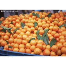 Kleine Größe Orange