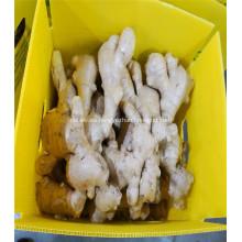 200 g de mayor venta de jengibre secado al aire