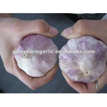Shandong,China, normal white garlic