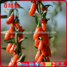 100% natural Goji berries and goji with certified
