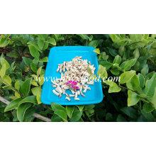 Chinês preto cogumelos