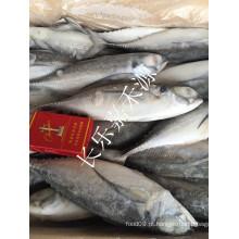 Venda Por Atacado China Frozen Hard Tail Scad Preço