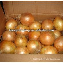 China cebola amarela