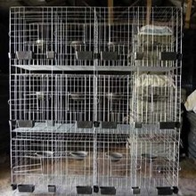 Сварные куриные клетки из нержавеющей стали