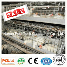 Galvanization Meat Chicken Cage System