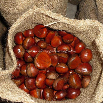 Chinese chestnut fruit Dandong types of chestnuts