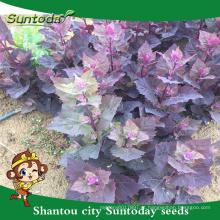 Suntoday catálogo de abastecimento de jardim de casa asiática vegetal híbrido Frutas e vegetais F1 Orgânica prunella asisatica nakai sementes (81001)