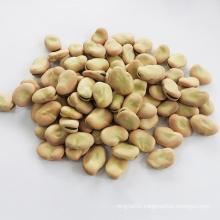 English bean fool bean Qinghai Origin broad beans