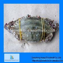 Crabes congelés crabe de natation bleue