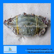frozen crabs blue swimming crab