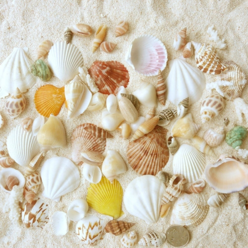 Beautiful Decorative Shells