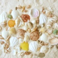 Hot Items Beautiful Shells for Decoration
