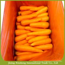 Venda barata nova safra chinesa cenoura