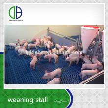 Matériel d'élevage sevrage Stall Pig Pen Porcinet Bétail