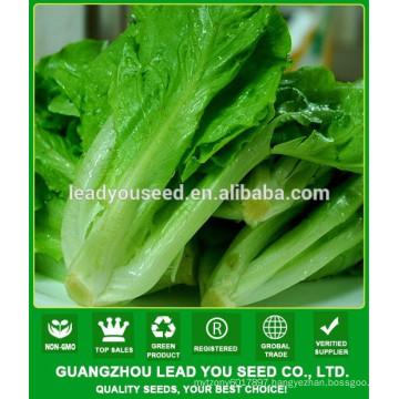 NLT06 Lunqi Guangzhou lettuce seeds supplier,lettuce seeds prices