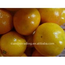 Frische chinesische Baby Mandarine