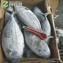 Frozen  Skipjack Tuna Bonito Sea Frozen