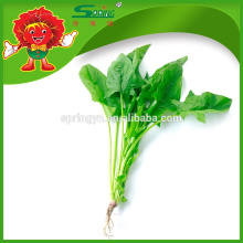 IQF whole leaf organic spinach