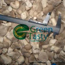 Nueva cosecha IQF Fresh Baby Oyster Mushroom