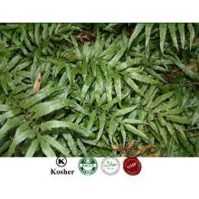 Fabricant Fournir 100% Natural Drynaria Rhizome PE