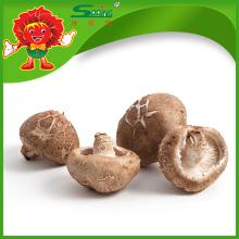 Hochwertiger Pilz frischer glatter Shiitake Pilz zum Verkauf