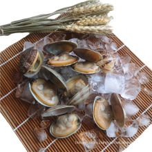 High quality frozen clams