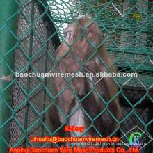 PVC beschichtet 50 * 50mm Tier Kettenglied Zaun