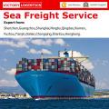 Профессиональный морской фрахт обслуживание/море экспедитор из Китая в мире (морские грузовые перевозки)