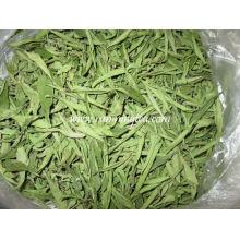 Stevia douce