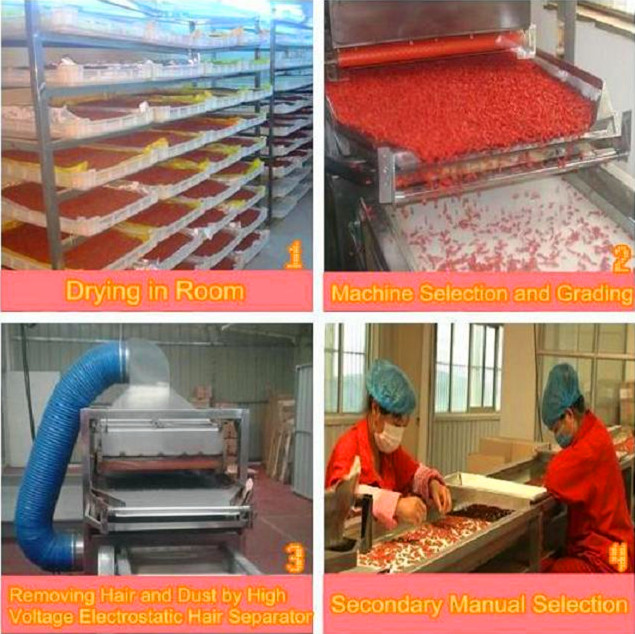 Goji berry wolfberry process procedure