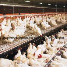Automatische Geflügelausrüstung für den Züchter
