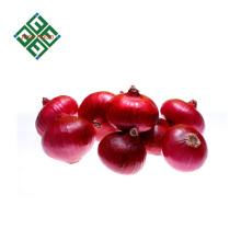 prix pour les gros oignons rouges frais
