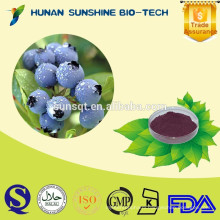 GMP factory high quality frozen bilberry powder anthocyanidins