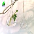 glass vase blown hydroponic glass terrarium vase wholesale