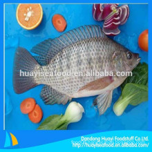 wholesale and retail all kinds of size frozen tilapia fish